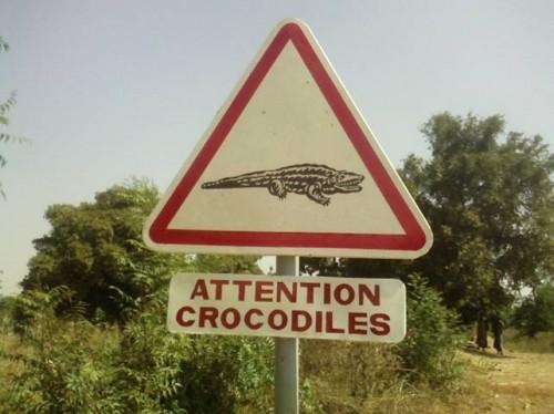 Attention crocodiles primo piano