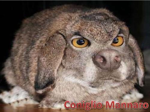 Coniglio_Mannaro_SlidingDoor